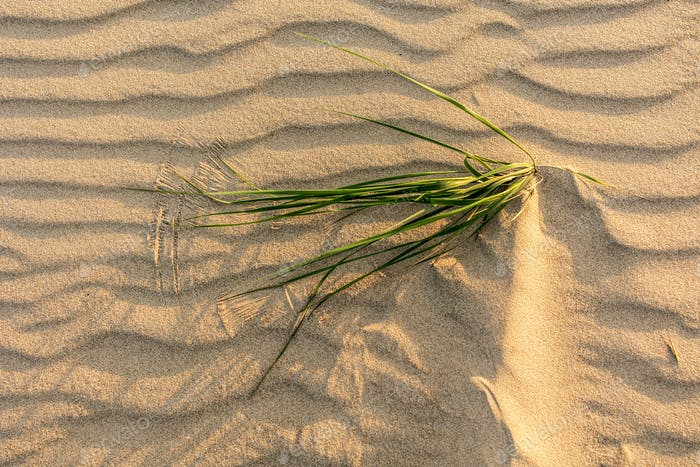 grass on wavy sea sand background, top view