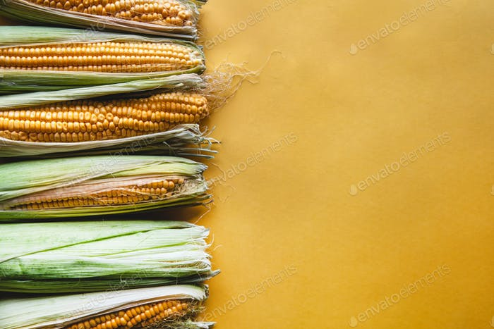 Fresh corn on a yellow background. Delicious food, vegetables