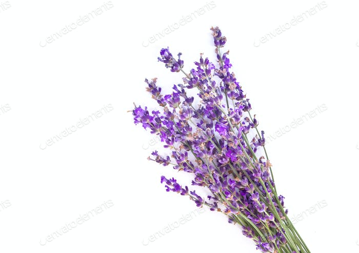 Bunch of lavender. Isolated object.