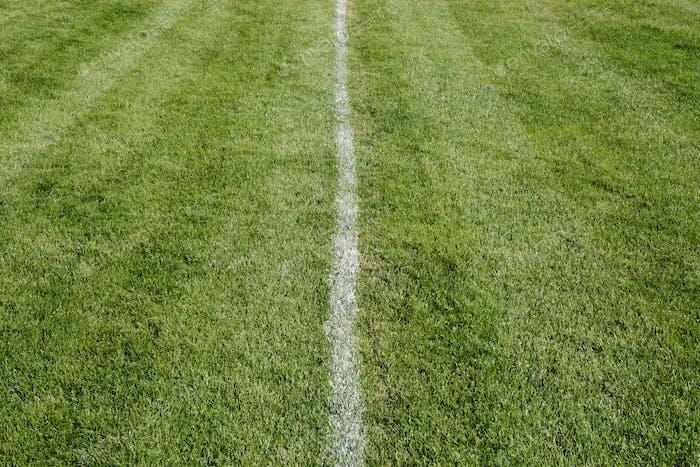 Weiße Mittellinie auf frisch geschnittenem Gras. Eine sportliche Spielfläche.