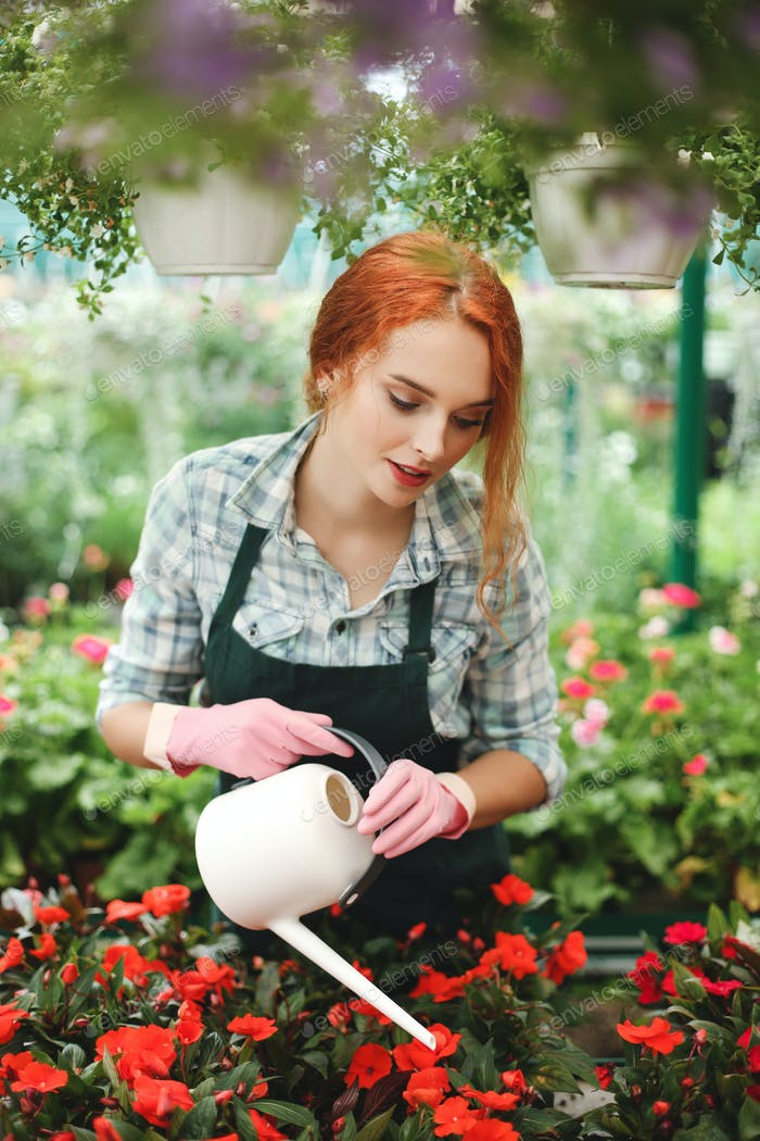 Young beautiful florist in apron standing with watering can and water the flowers in greenhouse