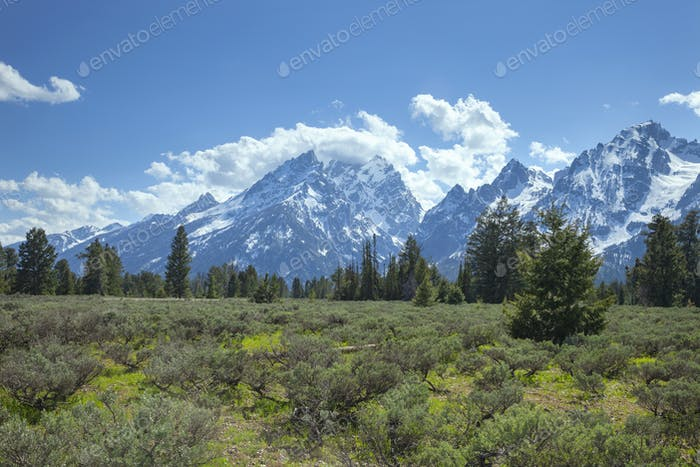 Grand Teton mountains rise above a meadow with pines on a sunny afternoon
