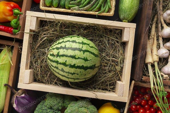 Große Bio-Wassermelone in Holzkiste auf Theke