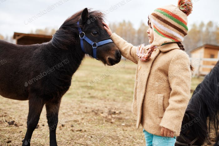 Horizontal medium shot of little Caucasian girl stroking young pony head