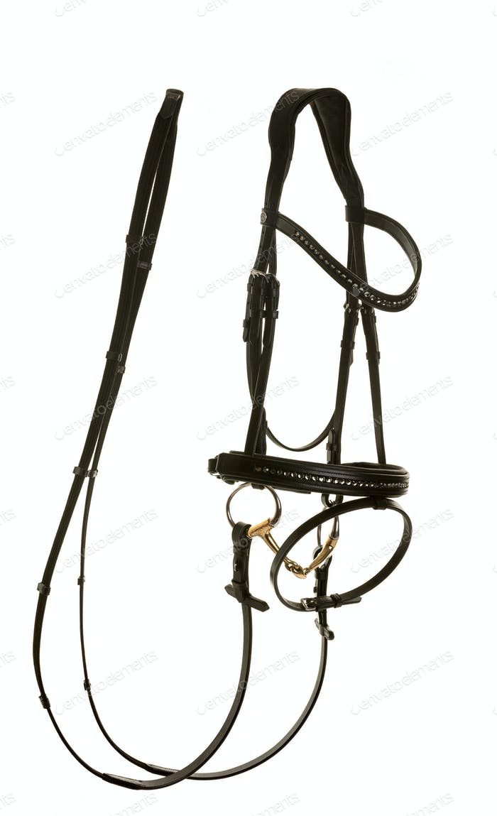 bridle in studio