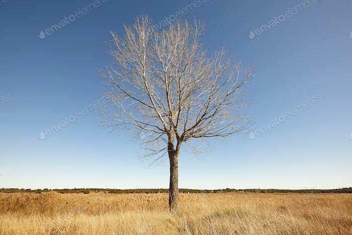 Nackter Baum auf dem Land. Einsamkeit und ziemlich Winterlandschaft.