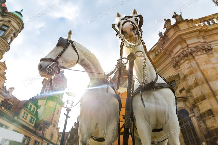 Excursion horses faces in old European tow