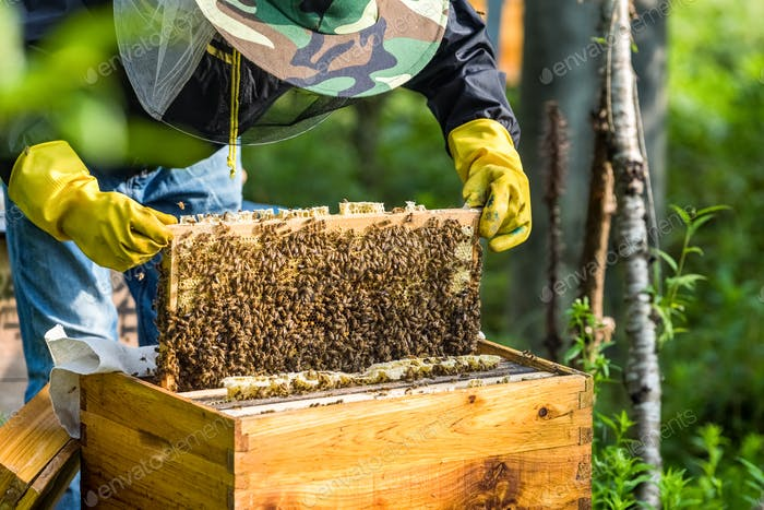 beekeeper is working