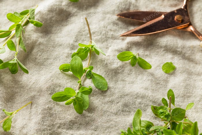 Organic Raw Green Marjoram Herb