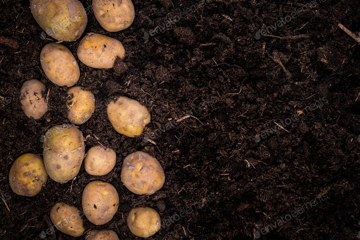 Young Potatoes on Soil, Border Background, Poster Template