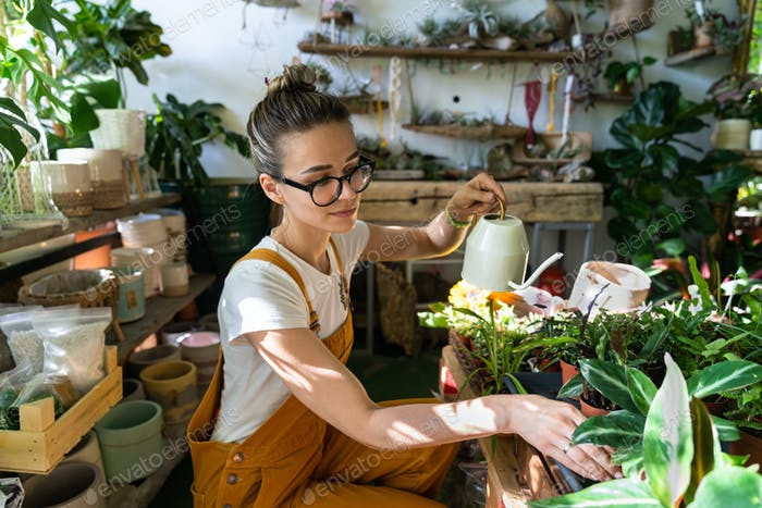 Woman gardener watering potted houseplant in green house, using watering can. Small business, hobby.