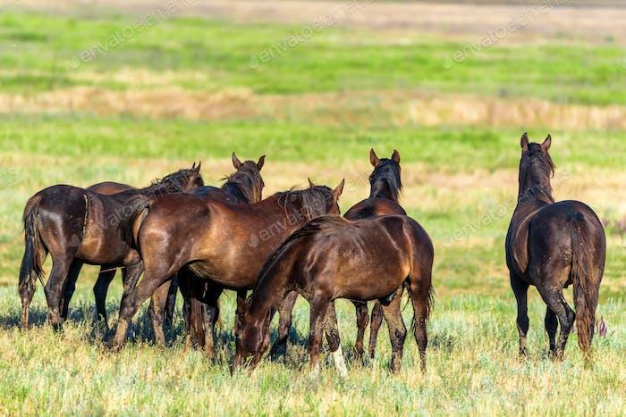 Back view wild horses graze in the sunlit meadow