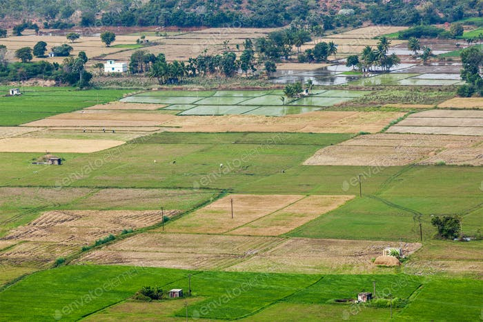 Aeiral view of Indian countryside with rice paddies, Tamil Nadu