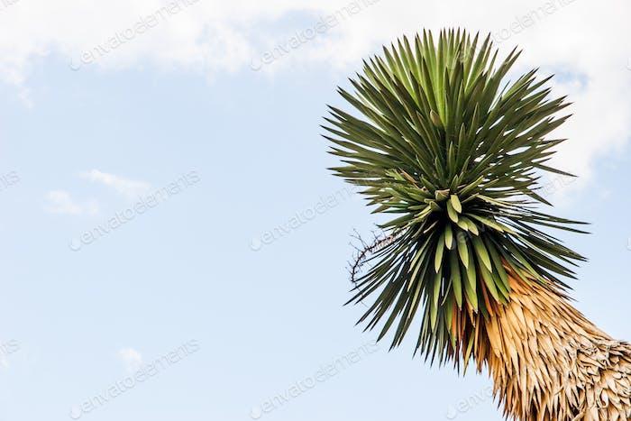 Palm tree on the blue sky