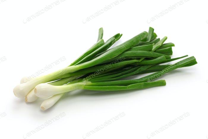 green onion, spring onion