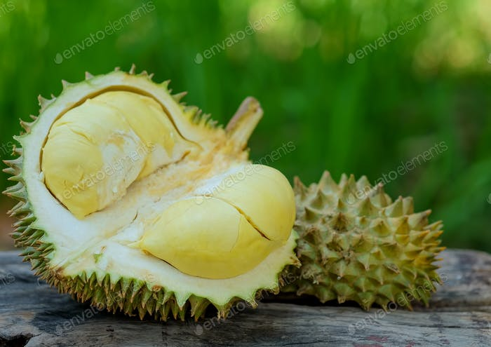 Durian king of fruits for summer.