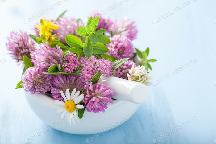 colorful medical flowers and herbs in mortar