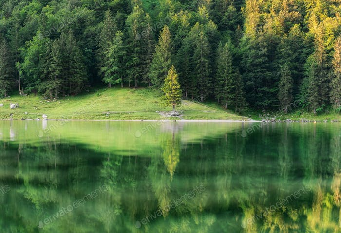 A forest and a lake with reflections. Summer landscape in Switzerland