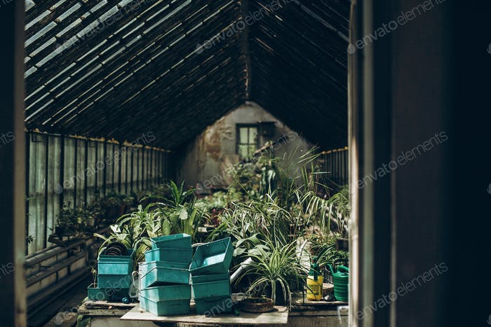 Inside of a greenhouse in botanical garden
