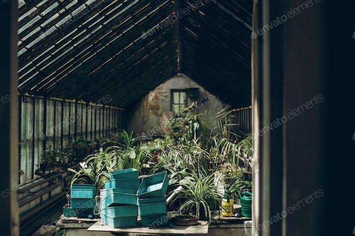 Im Inneren eines Gewächshauses im botanischen Garten