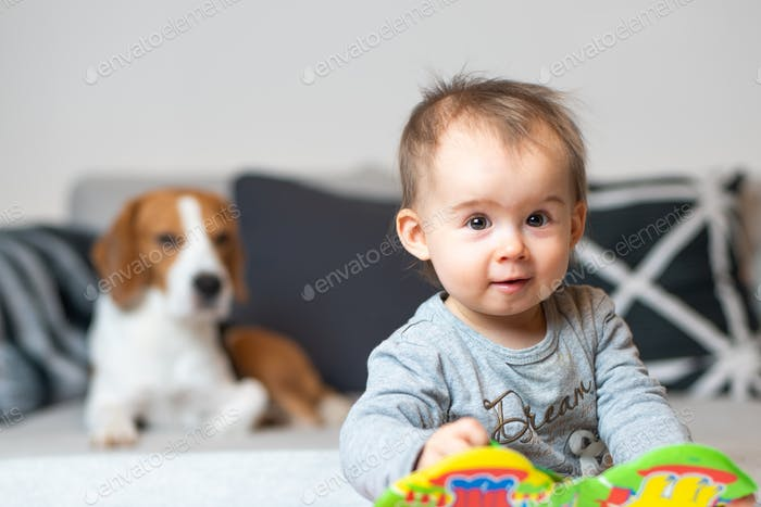 Baby with a Beagle dog in home. Family friendly dog in house