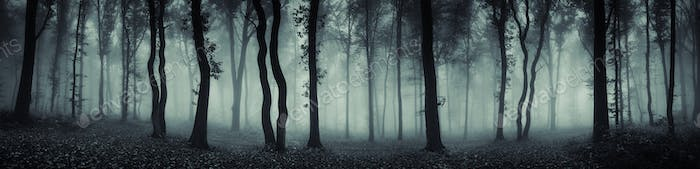 Mysterious forest panorama with fog