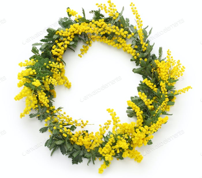 mimosa wreath isolated on white background