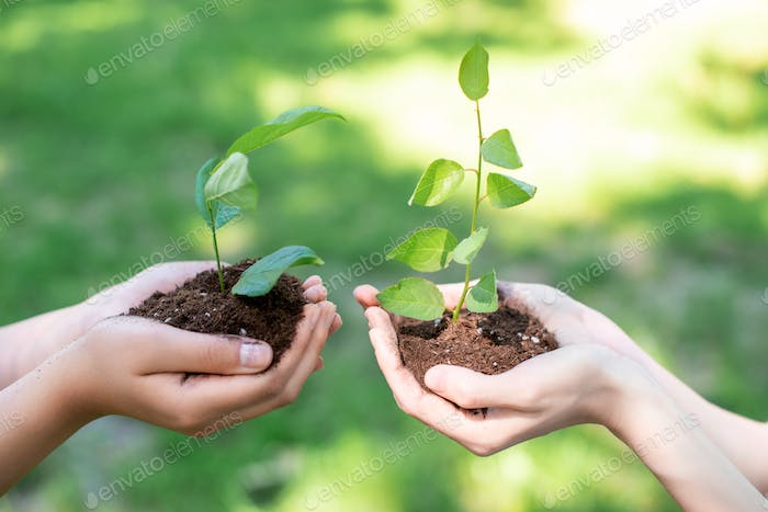 cropped view of women holding soil with sprouts in hands