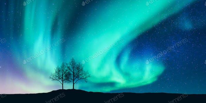 Aurora borealis und Silhouette der Bäume auf dem Hügel