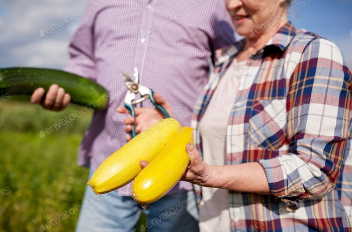 senior couple with squashes and secateurs at farm