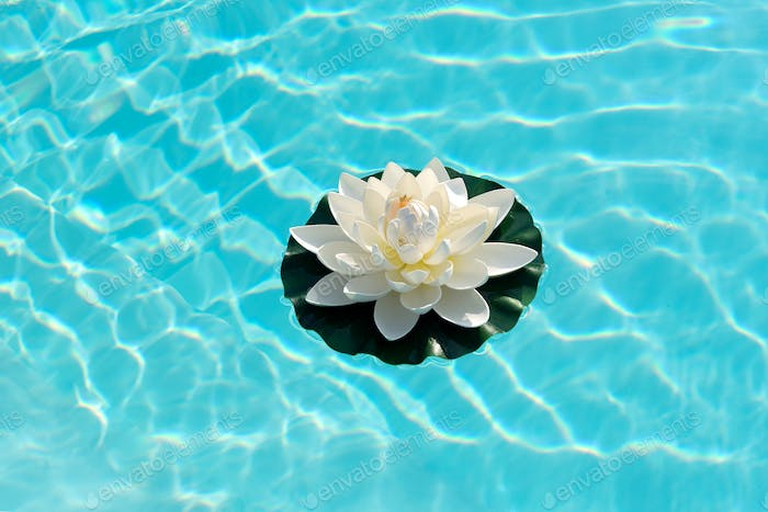 Water lily floating on sparkling sunlit water