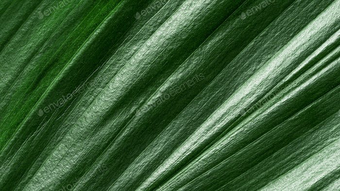 Extreme close up view of tropical leaf, background