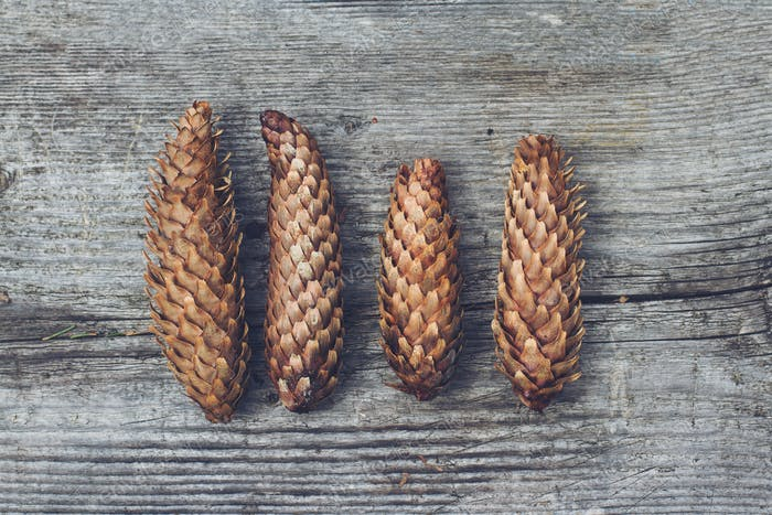 pine cones on wooden texture