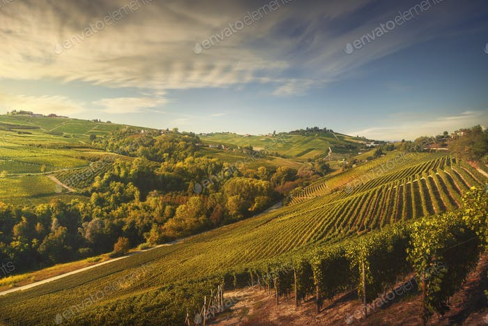 Langhe vineyards, Neive, Piedmont, Italy Europe.