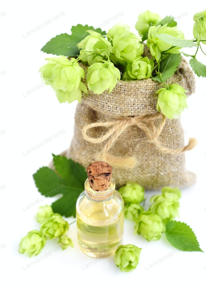 Fresh green hops (Humulus) in burlap bag with medicinal plant ex