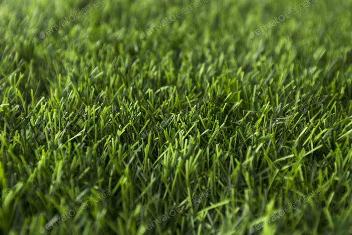 Green grass background with sun shadow, copy space