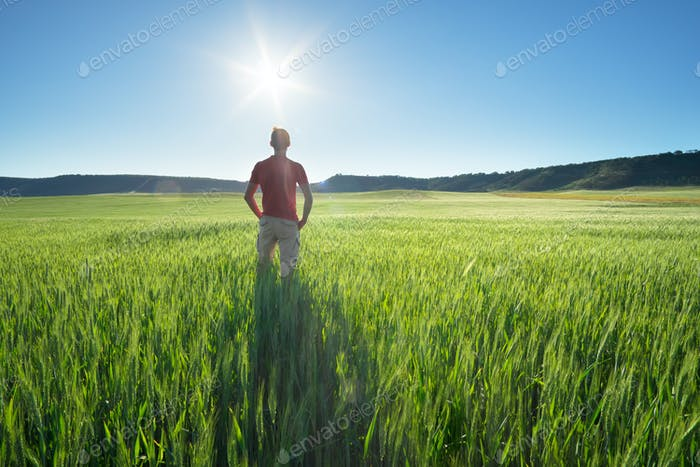 Mann in Wiese grüne Wiese von Weizen