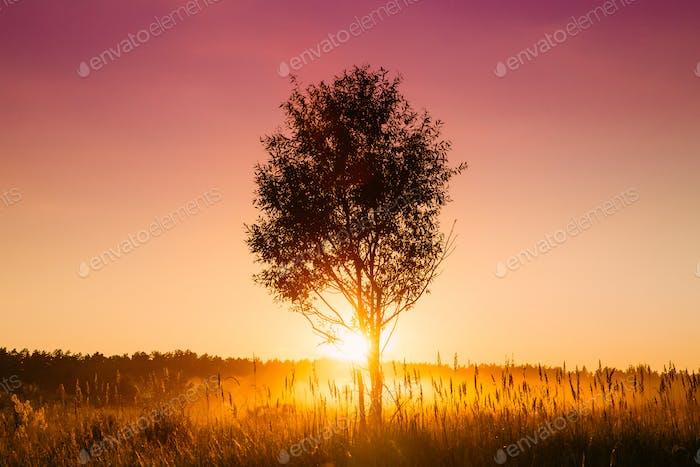 Sonnenuntergang Sonnenaufgang In Misty Herbst Wiese Landschaft Mit Einsam Baum