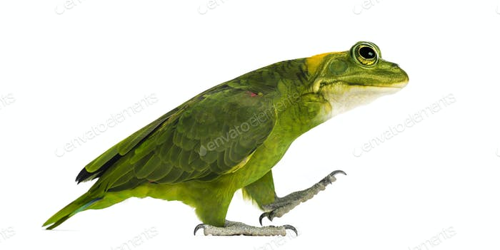 Yellow-naped parrot with head of frog, walking against white background