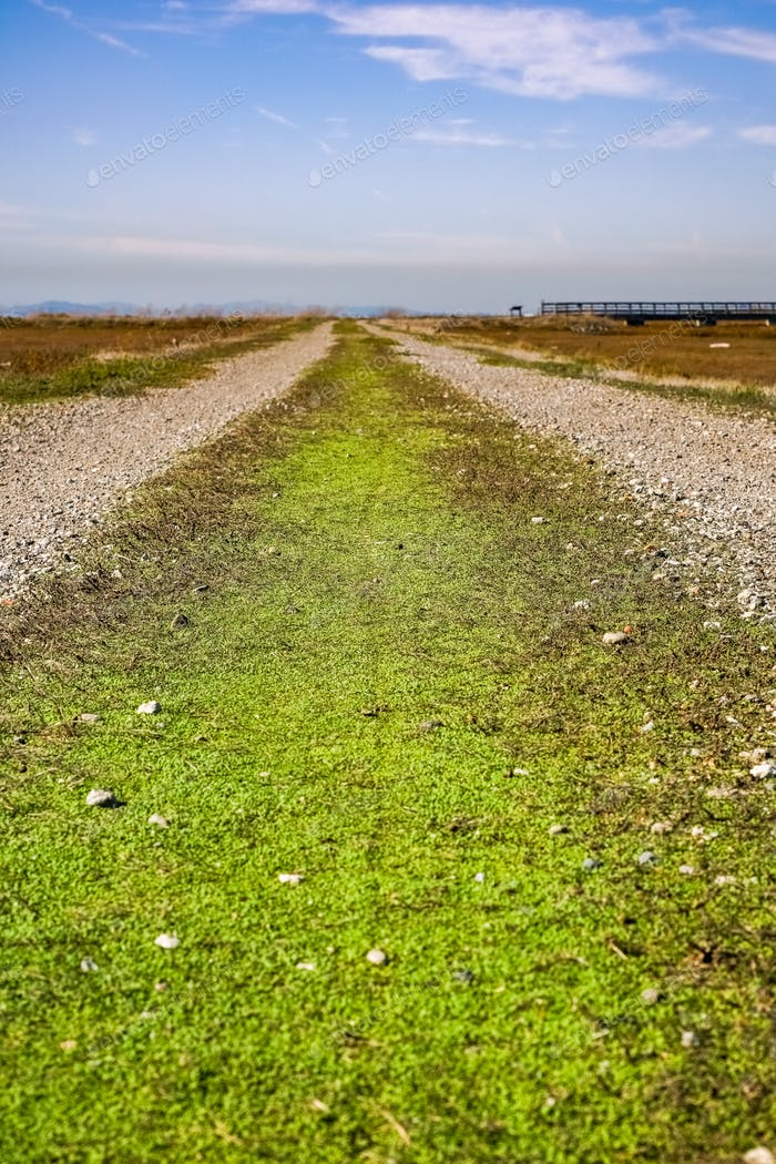 Path covered in tiny dense grass