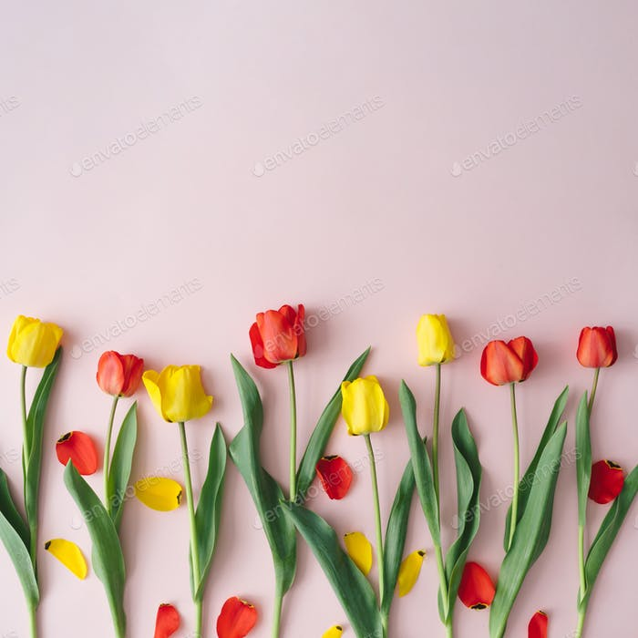 Creative layout made with red and yellow tulip flowers and leaves on pastel pink background.