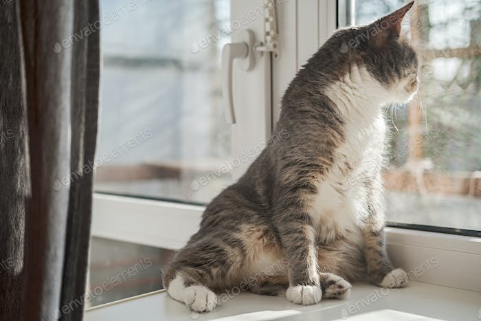 Cute cat relaxes on a window sill and looks out of the window in the rays of spring sun