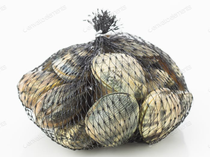 live clams isolated