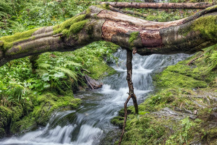 Fallen tree trunk over stream