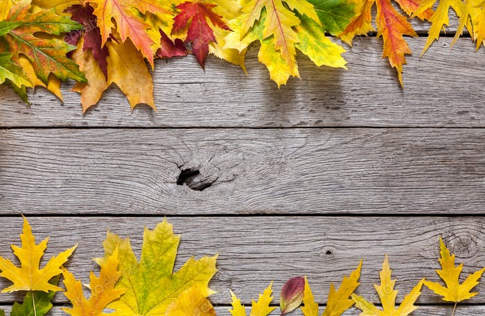 Autumn maple yellow leaves on rustic wood background