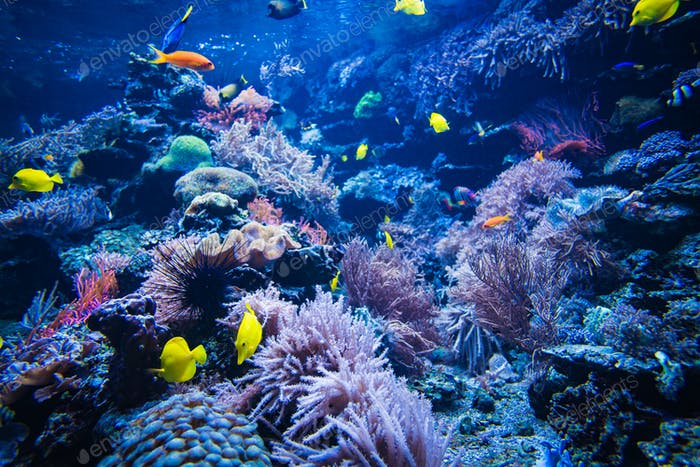Coral reef and fish underwater photo. Underwater world scene.