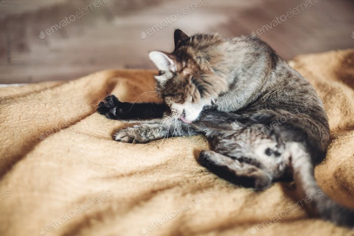 beautiful cat sleeping on stylish yellow blanket with adorable emotions in rustic room