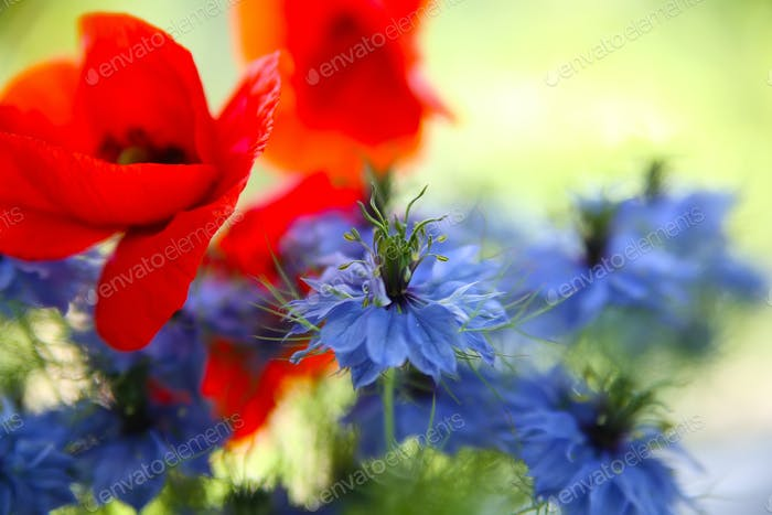 Cornflower and poppy in the bouquet