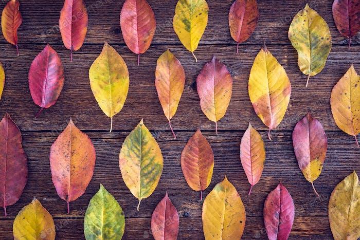 Herbstkomposition mit bunten Blättern auf Holztisch