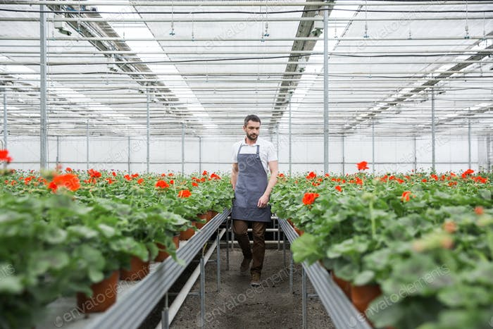 Handsome young man standing in greenhouse near plants